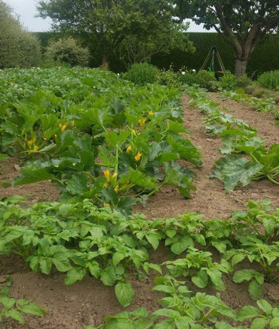 légumes du jardin boutique (2)