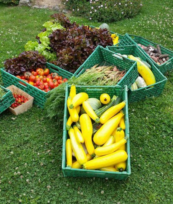 légumes du jardin boutique
